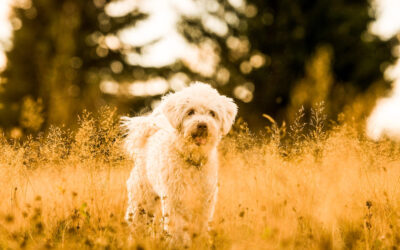 Krpelji kod pasa i drugih ljubimaca aktivni su tokom cele god