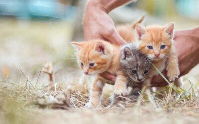 Najčešće zarazne bolesti mačaka: Panleukopenija