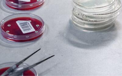Oboljenja kože kod ljubimaca: Malassezia pachydermatis