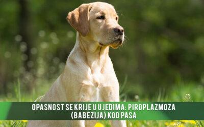 Opasnost se krije u ujedima: Piroplazmoza (babezija) kod pasa