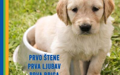 Prvo štene, prva ljubav, prva briga